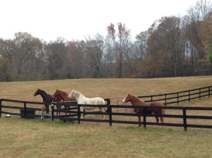 Our herd.