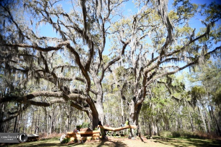 The trees at Red Hills in Tallahassee, Fla., are gorgeous!