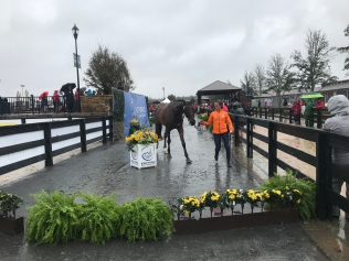 A very wet final horse inspection.
