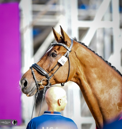 Steffenn Peters' Suppenkasper at WEG.